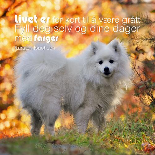 norske sitater om livet sandefjord